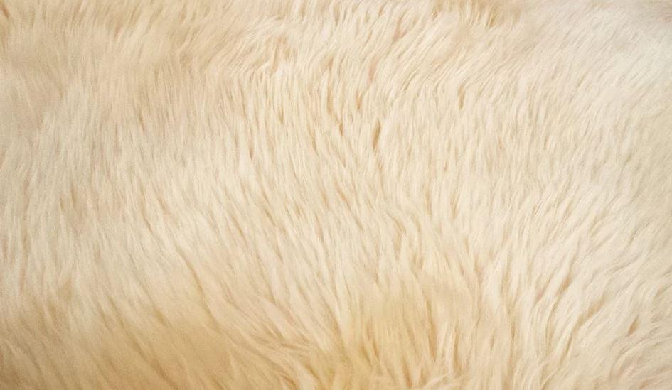 Mít doma koberec stále jako nový